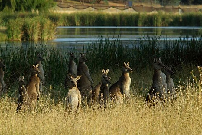 Canberra  The National Capital  Full Day Private Tour  Departs from Sydney - Find Attractions