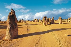 Pinnacles Desert Koalas and Sandboarding 4WD Day Tour from Perth - Find Attractions
