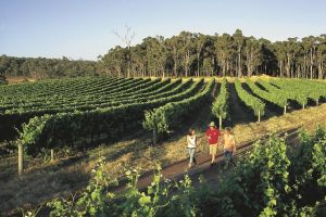 Margaret River Caves Wine and Cape Leeuwin Lighthouse Tour from Perth - Find Attractions