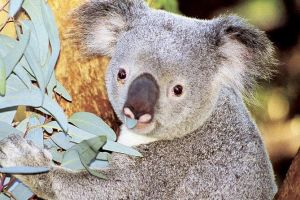 Perth Zoo General Entry Ticket and Sightseeing Cruise - Find Attractions