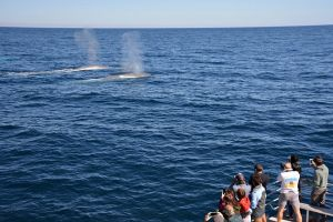 Blue Whale Perth Canyon Expedition - Find Attractions