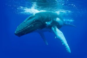 Dunsborough Whale Watching Eco Tour - Find Attractions