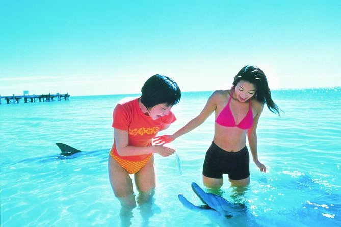 Monkey Mia Dolphins  Shark Bay Air Tour From Perth - Find Attractions