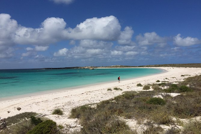 Abrolhos Island Half Day Fly and Flipper - Find Attractions