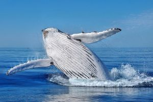 Whale Watching Dunsborough - Find Attractions
