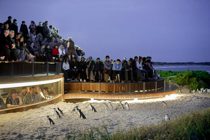 1 Day Private Phillip Island Tour VIP Charter up to 9 People - Find Attractions