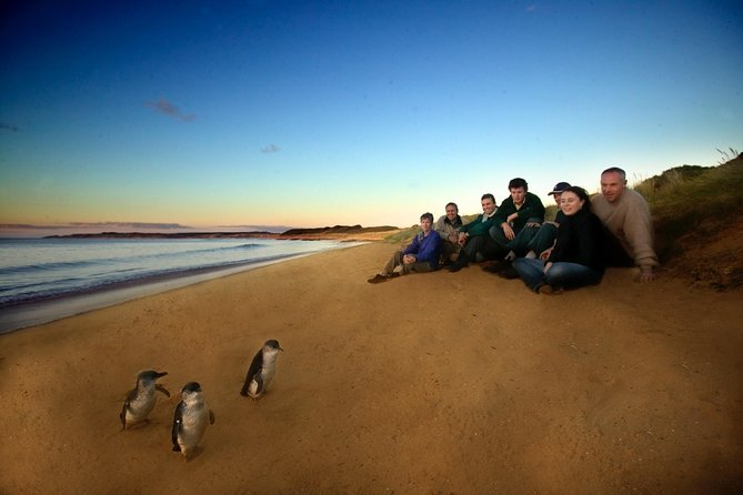 Phillip Island Ultimate Penguin Eco Tour or Skybox Experience - Find Attractions