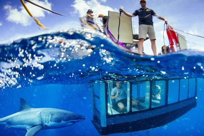 White Shark Tour with Optional Cage Dive from Port Lincoln - Find Attractions