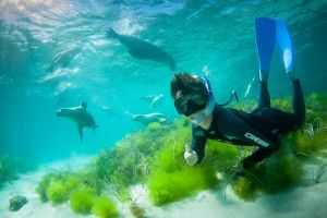 Half-Day Sea Lion Snorkeling Tour from Port Lincoln - Find Attractions