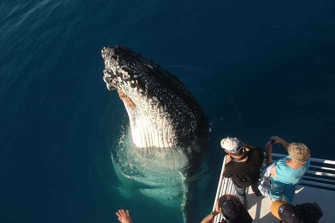Whalesong Cruises - Hervey Bay Whale Watching experience - Find Attractions
