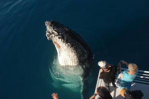 Hervey Bay Whale Watching Experience - Find Attractions