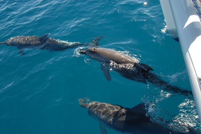 Fraser Island Sailing Adventure Cruise and Dolphin Watching from Hervey Bay - Find Attractions