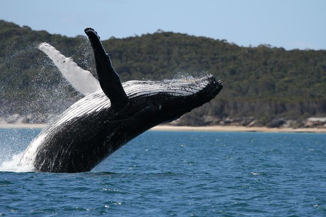Hervey Bay Ultimate Whale Watching Cruise - Find Attractions