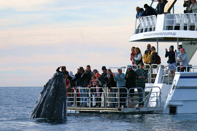 Hervey Bay Whale Watching Cruise - Find Attractions