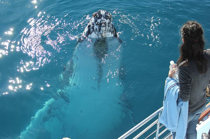 Hervey Bay Premium Whale Watching Cruise - Find Attractions