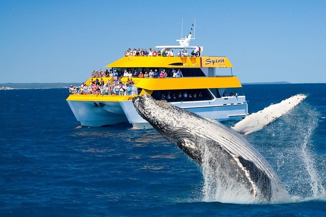 Spirit of Hervey Bay Whale Watching Cruise - Find Attractions