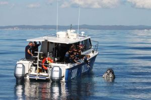 Hervey Bay Whale Swim and Watch - Find Attractions