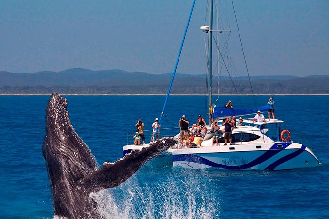 Blue Dolphin Small-Group Hervey Bay Whale Watching Cruise - Find Attractions