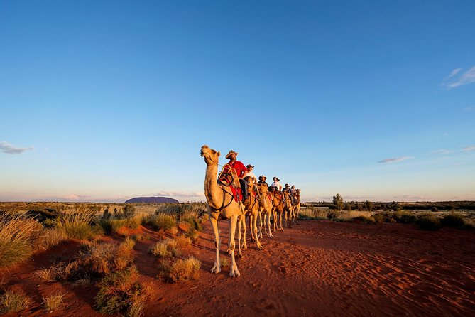 Uluru Camel Express Sunrise or Sunset Tours - Find Attractions