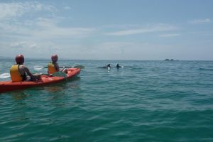 Kayaking with Dolphins in Byron Bay Guided Tour - Find Attractions