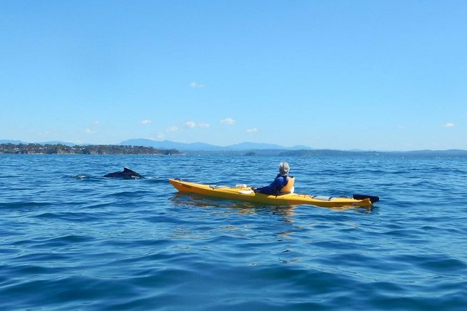 Whale Watching Kayak Tour from Batemans Bay - Find Attractions