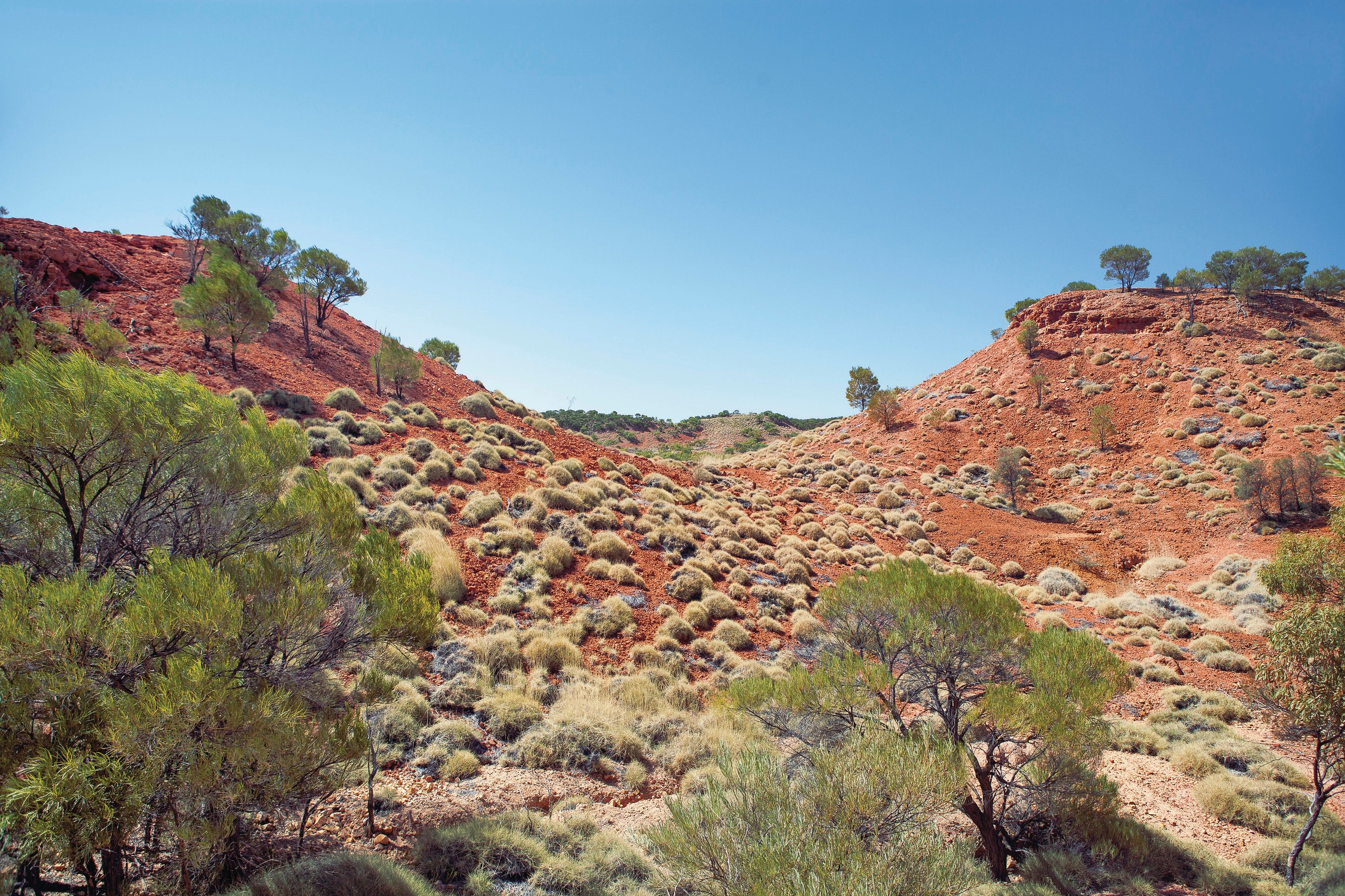 Lark Quarry Conservation Park - Find Attractions