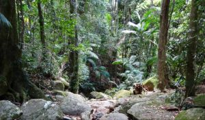 Lyrebird track - Find Attractions