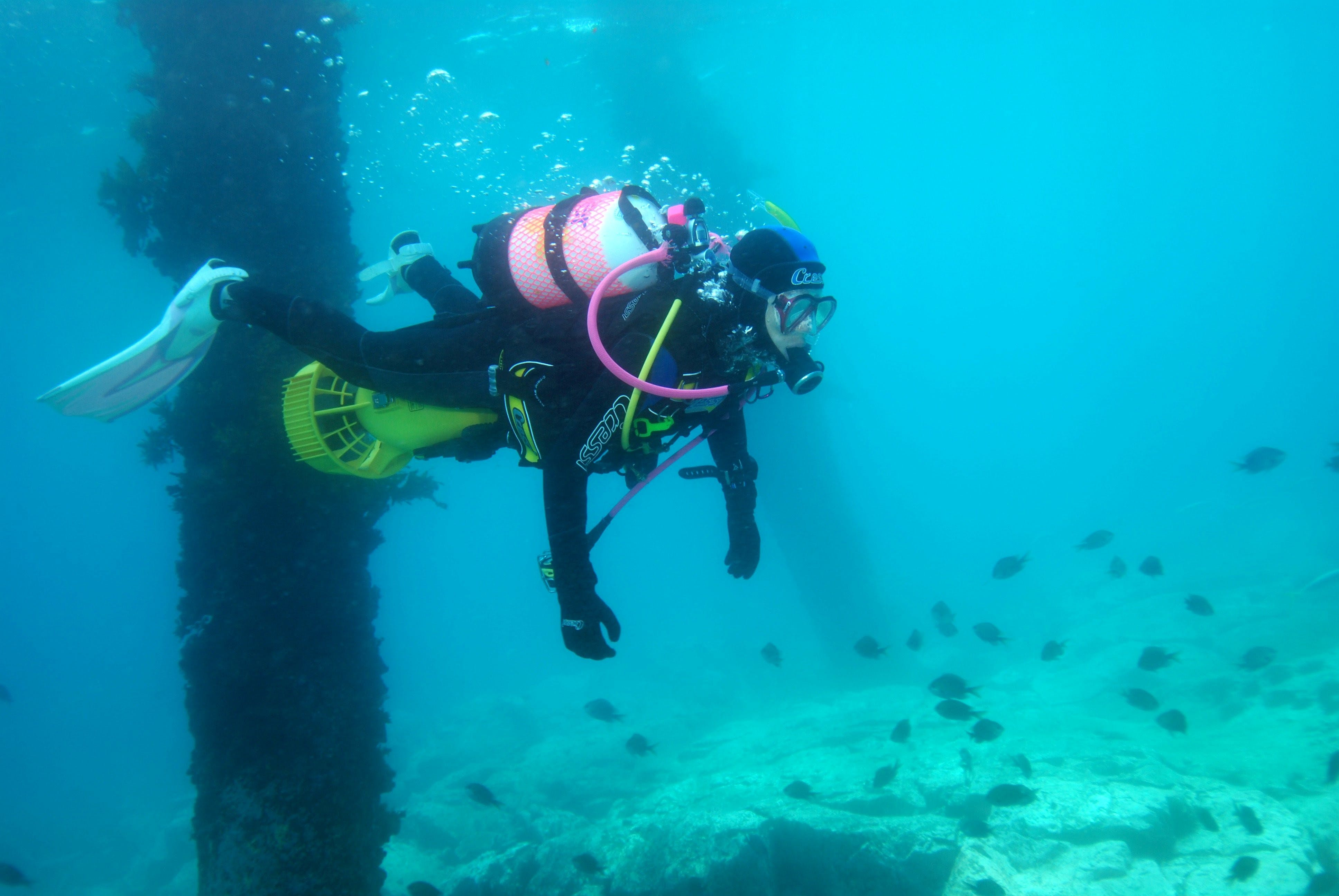 Shellharbour Scuba  and Photography Centre - Find Attractions