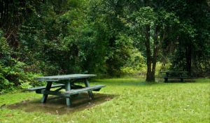 Williams River picnic area - Find Attractions