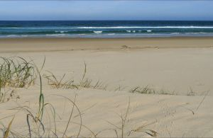 Bongil Beach - Find Attractions