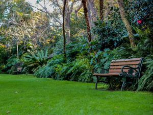 EG Waterhouse National Camellia Gardens - Find Attractions