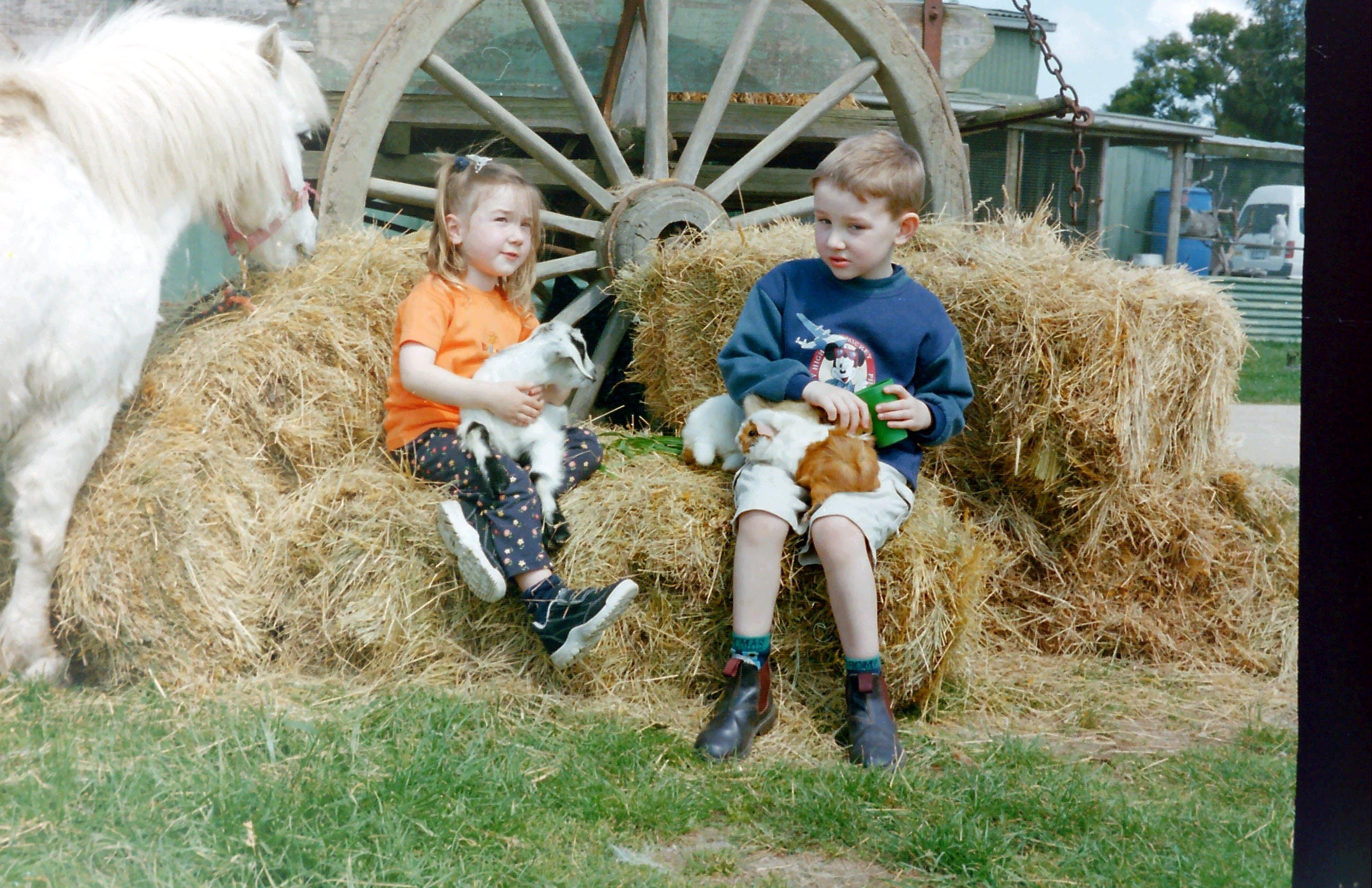 Rain Hayne and Shine Farmyard - Find Attractions