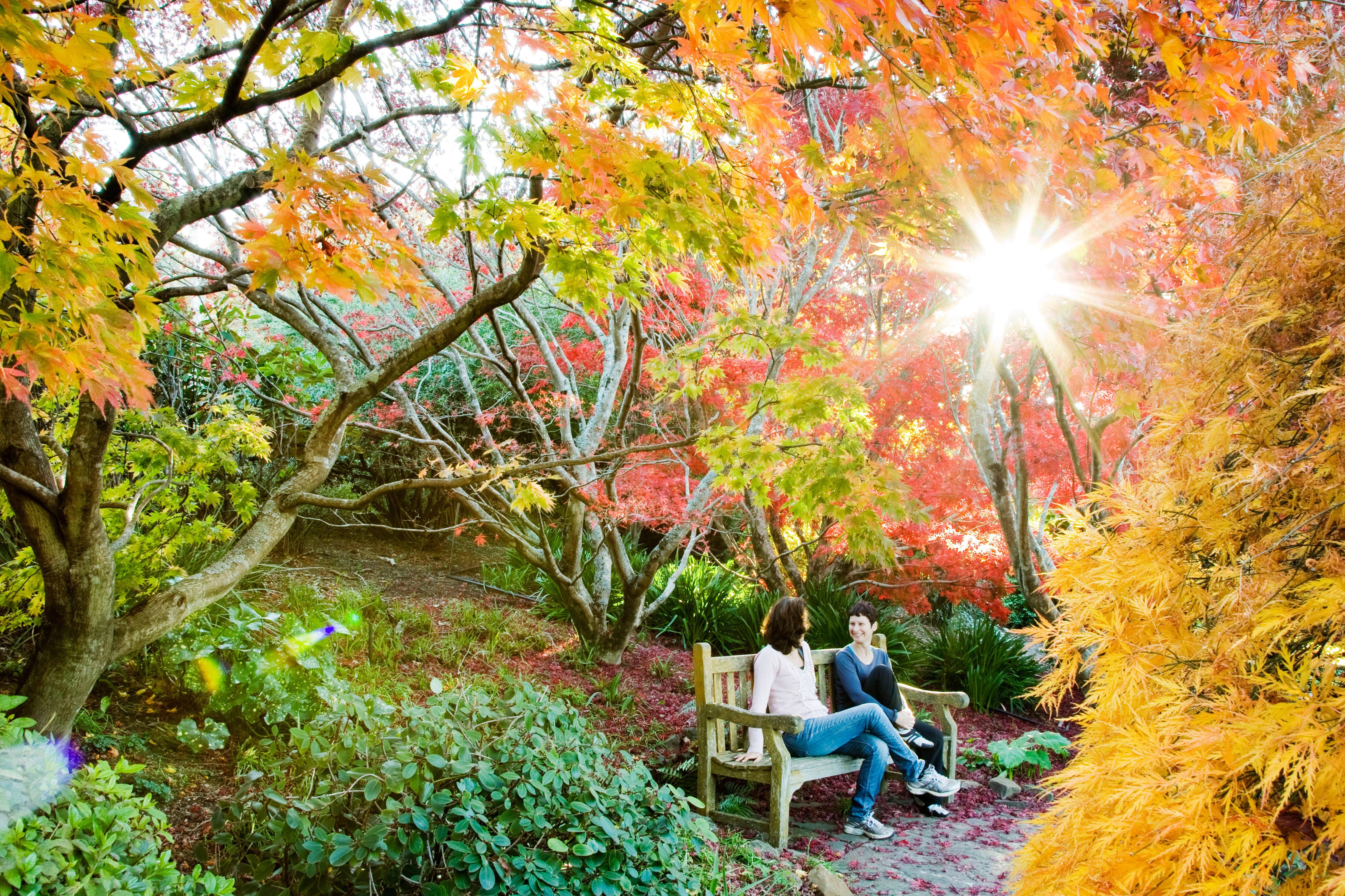 The Blue Mountains Botanic Garden Mount Tomah - Find Attractions