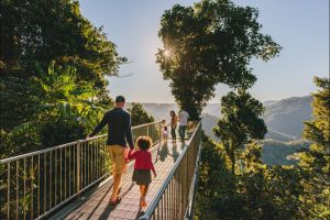 Mamu Tropical Skywalk - Find Attractions
