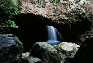 Natural Bridge Circuit Springbrook National Park - Find Attractions