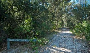 Lillypilly loop trail - Find Attractions