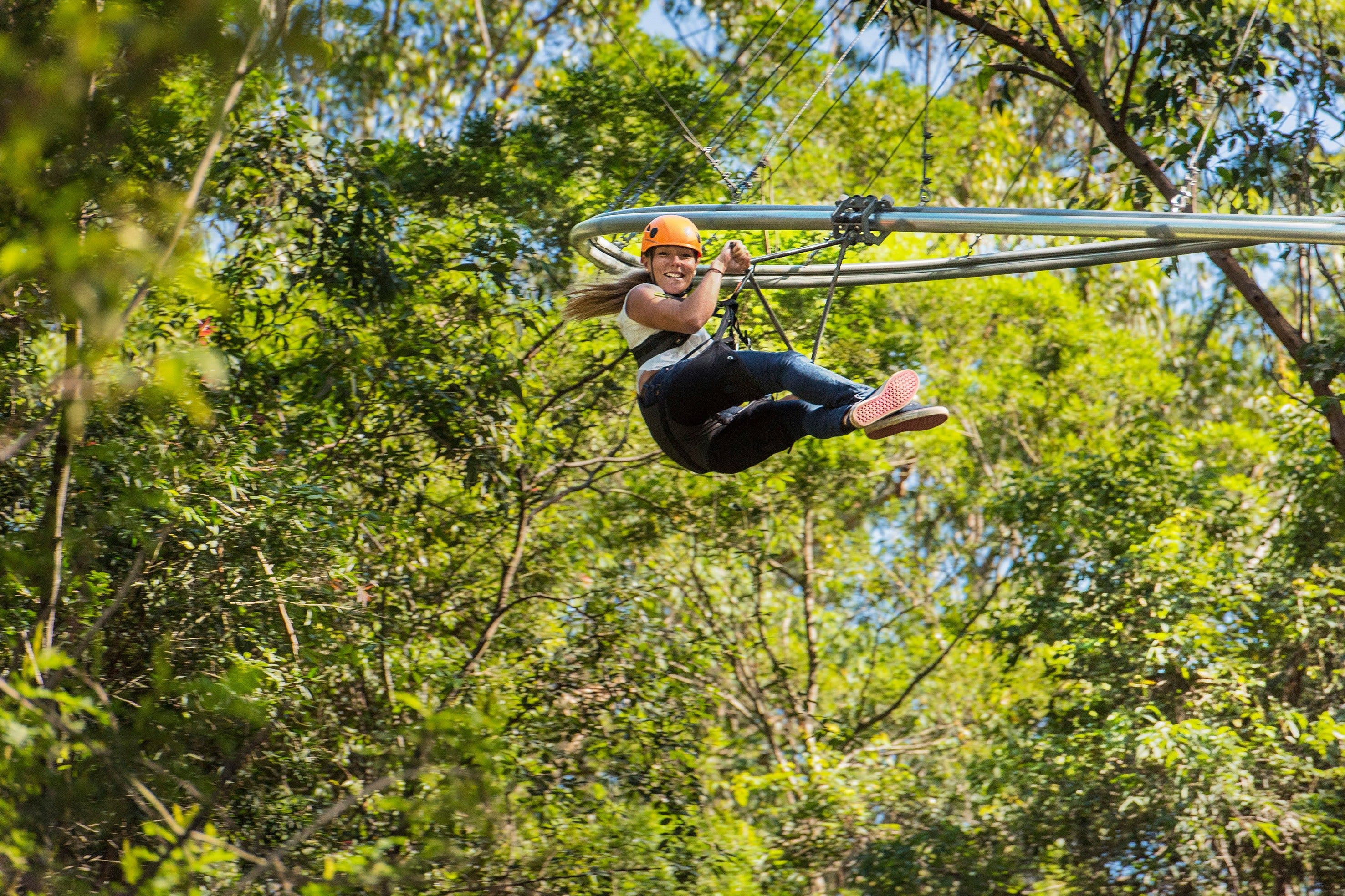 TreeTop Crazy Rider - Find Attractions