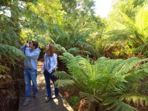 Endeavour Fern Gully Walks - Find Attractions