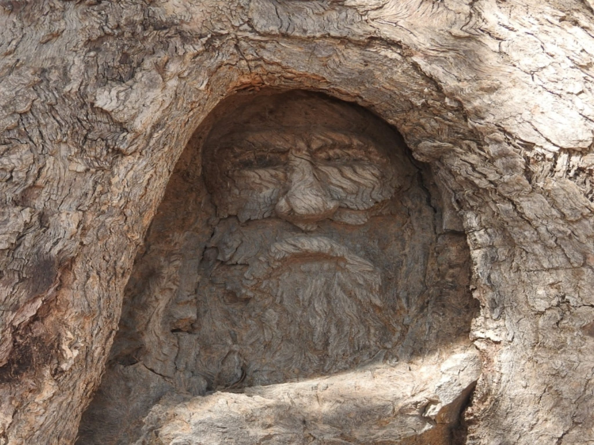 The Face Tree near Burke and Wills Dig Tree - Find Attractions