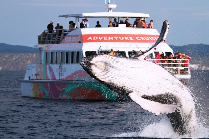 Half-Day Whale Watching in Urangan - Find Attractions